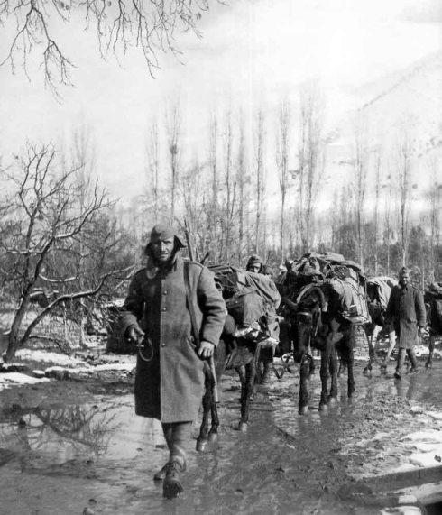 war-horse-59